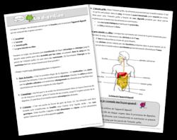 plan de travail sciences digestion leçon